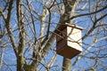 Wooden nest birds Royalty Free Stock Photo