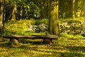 Wooden old bench in park in the afternoon Royalty Free Stock Images