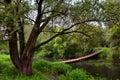 Wooden old swinging bridge Royalty Free Stock Photo