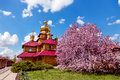 Wooden Orthodox church and a purple blossoming magnolia tree at sunny day Royalty Free Stock Photo