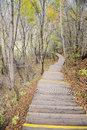 Wooden path in autumn forest Royalty Free Stock Photography