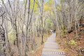 Wooden path in autumn forest Stock Photo