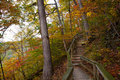 Wooden path in the forest in Fall Stock Photo