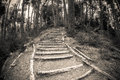Wooden path in the forest without people Royalty Free Stock Photos