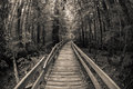 Wooden path in the forest without people Royalty Free Stock Photo