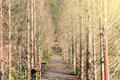 Wooden path in forest under sunset light Royalty Free Stock Photos