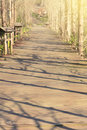 Wooden path in forest under sunset light Royalty Free Stock Photo