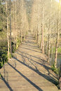 Wooden path in forest under sunset light Royalty Free Stock Image
