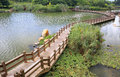 Wooden path in the lake Stock Image