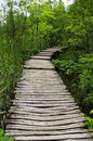 Wooden path plitvice lakes national park croatia Stock Images
