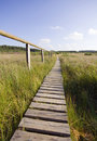 Wooden path vanishing in marsh Royalty Free Stock Photos