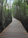 Wooden path walk to forest tropical mangrove Royalty Free Stock Photos