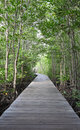 Wooden path walk to tropical forest Royalty Free Stock Photo