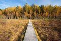 Wooden path way pathway from marsh swamp to beautiful forest au autumn nature landscape board boarding on ground near Stock Images