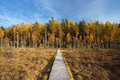 Wooden path way pathway from marsh to forest autumn swamp season Stock Photography