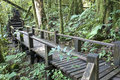 Wooden pathway in rainforest, Thailand Royalty Free Stock Photography