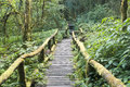 Wooden pathway in rainforest, Thailand Royalty Free Stock Photos
