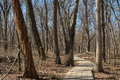 Wooden pathway. Royalty Free Stock Photo