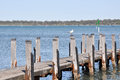 Wooden Pier with Australian Sea Gull Royalty Free Stock Photo