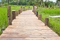 Wooden plank walkpath in rice field Royalty Free Stock Image