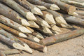 Wooden pointed scaffolding eucalyptus wood Stock Image