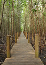 Wooden pole path walk to tropical forest Stock Photo