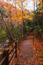 Wooden Road In Golden Fall For...