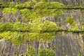 Wooden roof with moss Royalty Free Stock Photo