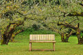 Wooden seat in garden Royalty Free Stock Photo