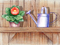 Wooden shelf with flower pot pencil hand drawn illustration of a and a watering can Royalty Free Stock Image