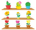 Wooden shelves with ornamental plants illustration of the on a white background Royalty Free Stock Photos