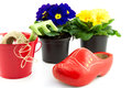 Wooden shoe, bucket and primroses isolated Royalty Free Stock Images