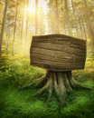 Wooden sign in the forest magic dark Stock Photo