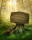 Wooden sign in the forest magic dark Royalty Free Stock Photo