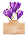 Wooden sign and spring flowers crocus Royalty Free Stock Photos