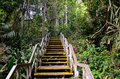 Wooden staircase leads into rain forest a with peeling yellow paint up the heart of the area inside macritchie reservoir singapore Stock Photography