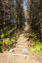 Wooden stairs in forest that lead tothe top of a small mountain Royalty Free Stock Photo
