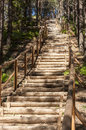 Wooden stairs in forest that lead tothe top of a small mountain Stock Images
