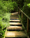 Wooden stairs in green bushes Stock Image