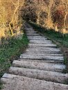Wooden stairs on path through woods Royalty Free Stock Photo