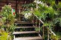 Wooden stairs in tropical house Stock Photography