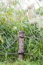 Wooden stakes by the river Royalty Free Stock Photo