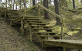 Wooden steps into the forest in fall Royalty Free Stock Photography