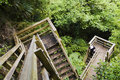 Wooden steps in lush forest Royalty Free Stock Photography