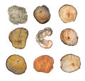 Wooden stump isolated on the white background. Round cut down tree with annual rings as a wood texture