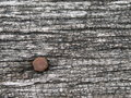 Wooden surface and nail old with rusty metallic Stock Photos