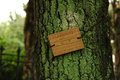Wooden tag on mossy tree bark