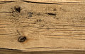 Wooden texture brown old wood background timber Royalty Free Stock Photos