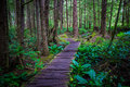 Wooden trail in a temperate rainforest to Shi Shi Beach Royalty Free Stock Photo