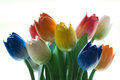 Amsterdam Wooden Tulips Royalty Free Stock Photo